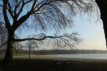 Der Baum beugt sich über den Tisch von Pim van der Horst
