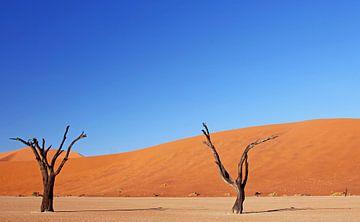Dead Vlei Namibia sur W. Woyke