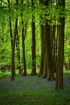 Waldhyazinthen in einem Wald in England von Anges van der Logt