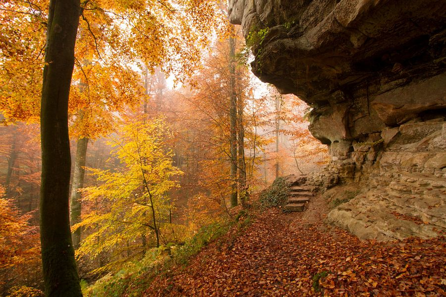Prachtige herfstkleuren in het bos