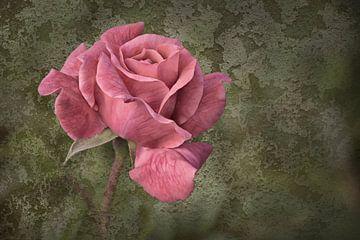 Rose von Dieter Beselt