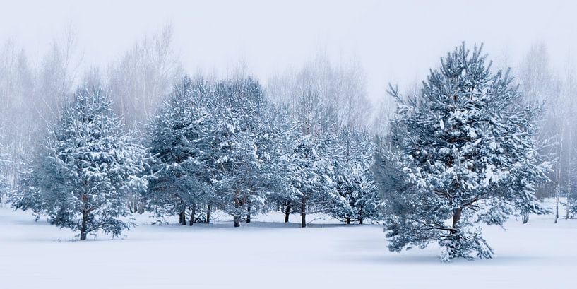 Blue Winter van Violetta Honkisz