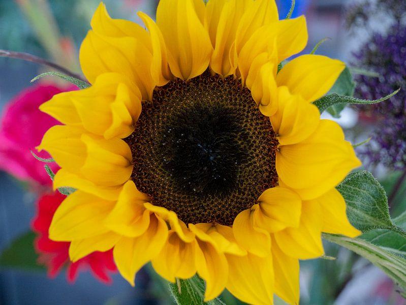 Zonnebloem uit boeket van Matthijs Noordeloos