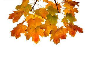 Gekleurde herfstbladeren
