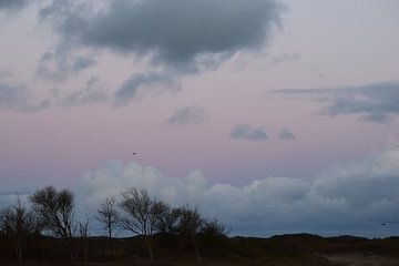 Roze van Amber van den Broek
