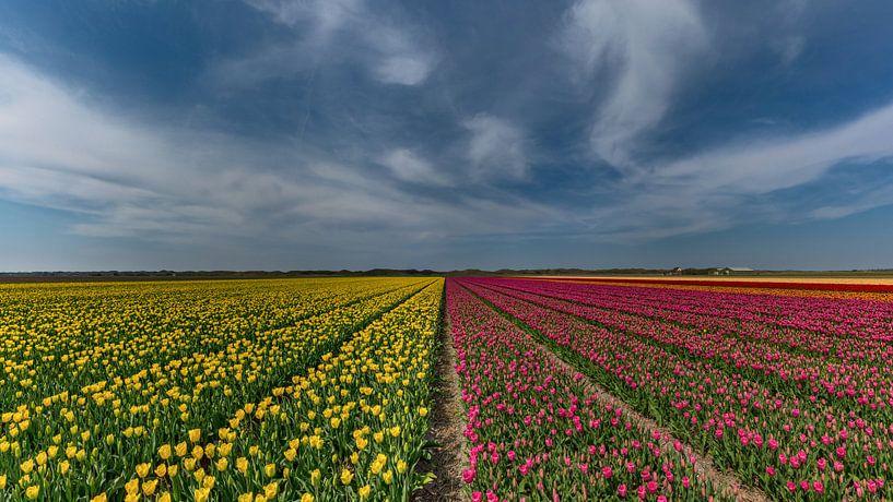 Tulpen op Texel van Texel360Fotografie Richard Heerschap
