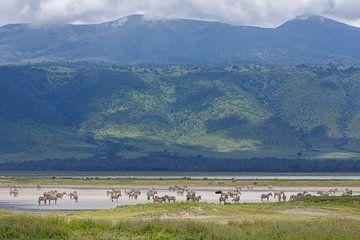 Zebras paddeln im Krater von Anja Brouwer Fotografie
