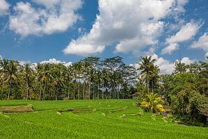 Beste schilderachtige Aziatische achtergronden en landschappen, volkscultuur en natuur van Bali en J