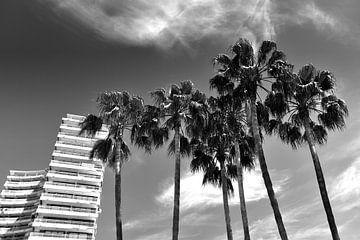 Palmen, Spanien (Schwarz-Weiß) von Rob Blok