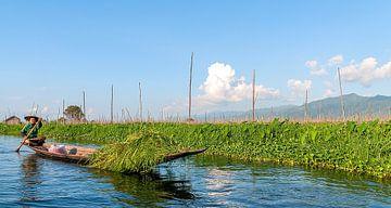 Myanmar: Landbouwer op Inle meer (Pan Nan) van Maarten Verhees