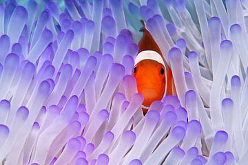 Nemo van Norbert Probst