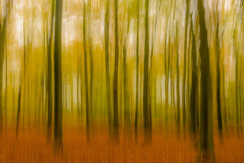 Abstract herfstbos van Sjoerd van der Wal