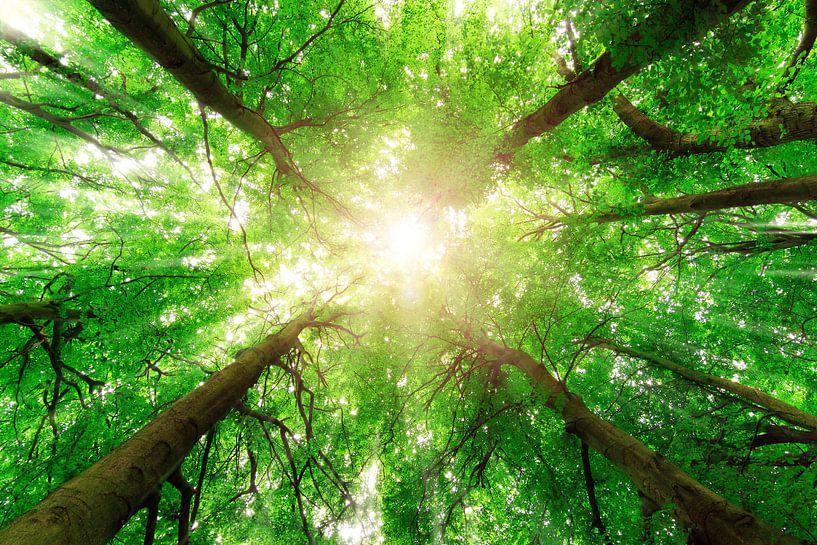Groene boomtoppen van Dennis van de Water