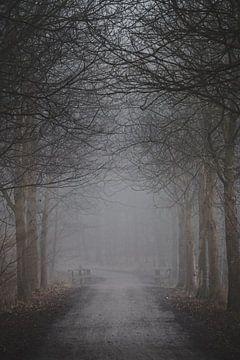 Bospad in herfstmist van Marc-Sven Kirsch