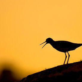 Roepende Tureluurs van Sam Mannaerts Natuurfotografie