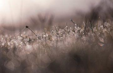 Teichgras von Tania Perneel