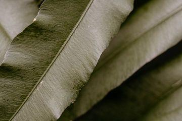 Pflanzen von Myrthe Vlasveld