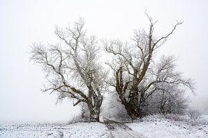 twee oude populieren op een landweggetje bij koud grijs winterweer, kopieerruimte van Maren Winter