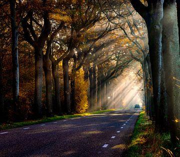 Morgendliche Sonnenstrahlen Waldallee von Claudia De Vries