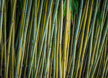 Bamboe sur Karin Tebes