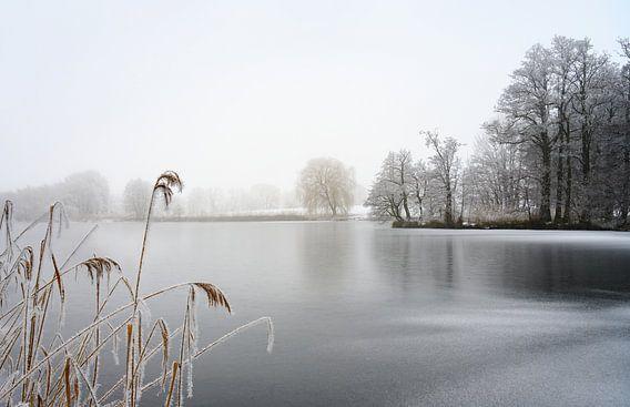 bevroren meer met riet en kale bomen bedekt met rijp op een koude mistige winterdag, grijs landschap