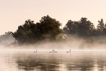 Schwäne mit Nebel im Biesbosch von Evelien Oerlemans