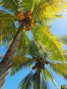 Palmbomen bij opkomende zon in Mauritius van
