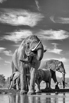 Olifanten van Robert Peeters