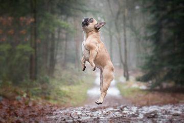 Jump  von Mirjam  Schreurs