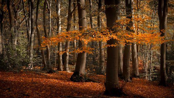 Herfstbladeren aan een tak en op de bodem op de Sint Jansberg van Michel Seelen