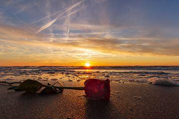 Roos tijdens zonsondergang van Henri De Wit