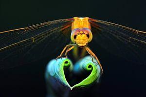 Dragonfly show love heart van Yuan Minghui