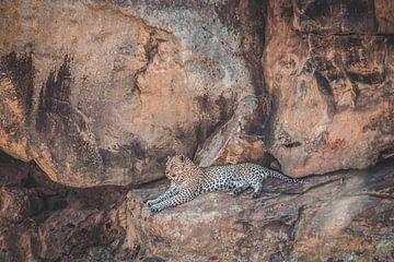 Leopard im Krüger-Nationalpark in Südafrika von Expeditie Aardbol