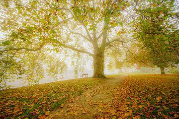Romantisch bos van Dirk van Egmond