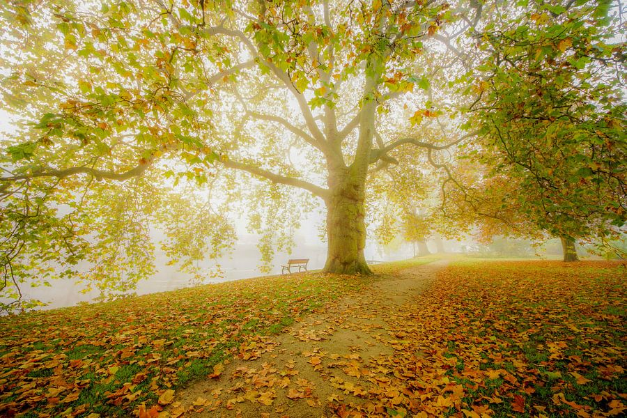Romantisch bos