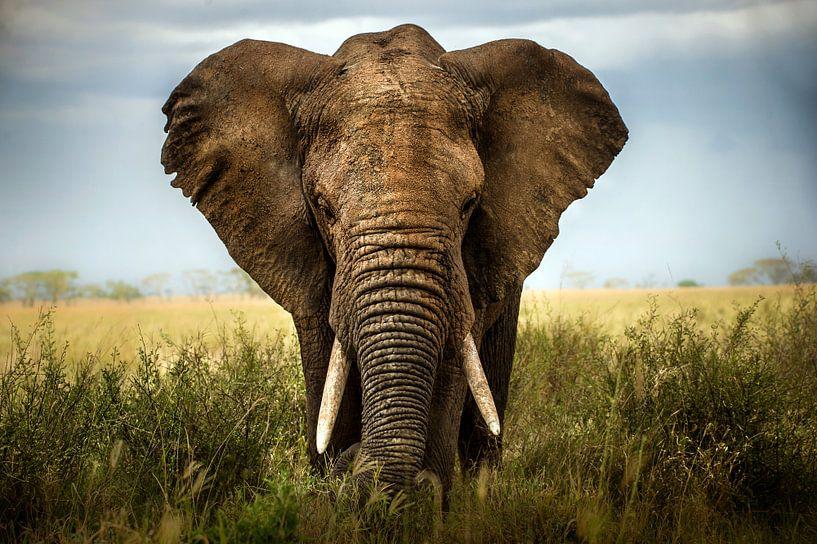 Ontmoetingen in de Serengeti, Alberto Ghizzi Panizza van 1x