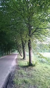Groen van Ria De Jonge