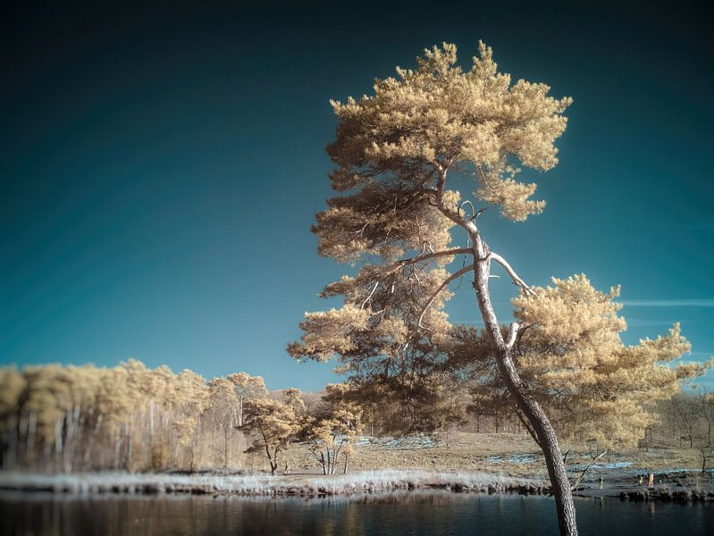 Tree van Lex Schulte
