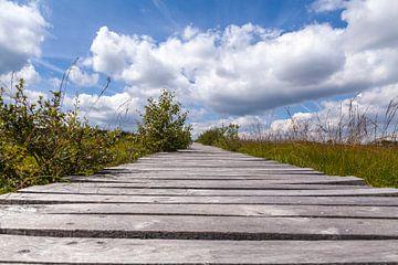 Perspectief in de Ardennen van Nel Diepstraten