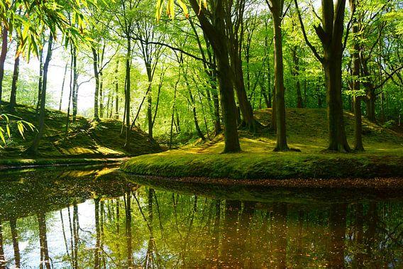 Wald von Michel van Kooten