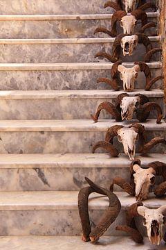 Schedels van rammen in een rij op een trap. Skull van Bobsphotography