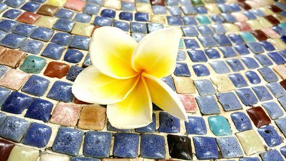 Bloem van een frangipani op een mozaïek gekleurde steentjes in Vietnam (liggend)