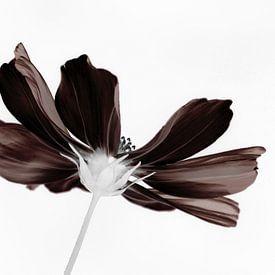 Dark Lady van bird bee flower and tree