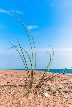 Atlantikküste 2 von