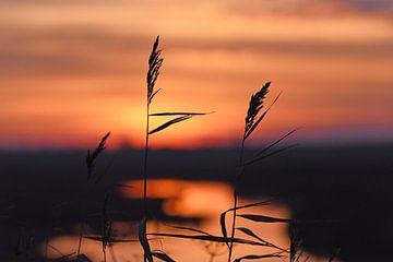 Landschap:  Zonsondergang in Zeeland van Koolspix