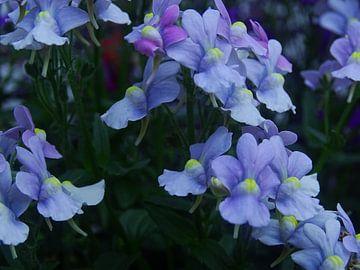 Blauwe bloem von Sanne Compeer