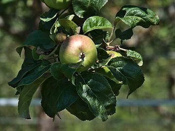 Apple sur Timon Schneider