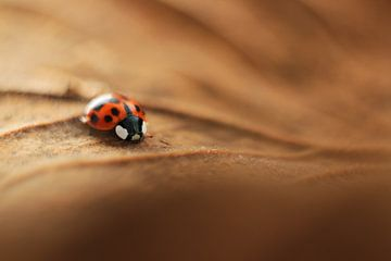 Little Ladybug von Michelle Zwakhalen