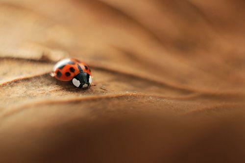 Little Ladybug van
