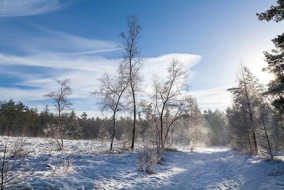 De Ugchelse Berg-Het Leest in de sneeuw#1 van DuFrank Images